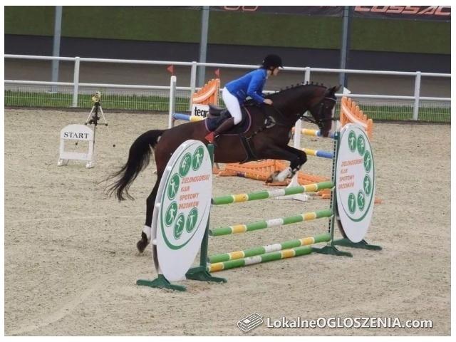 Sprzedam konia sportowego dyscyplina skoki
