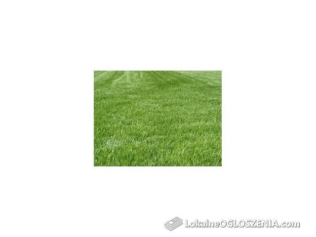 Trawa rekreacyjna ogrodowa nasiona trawniki Wysyłka kurierem