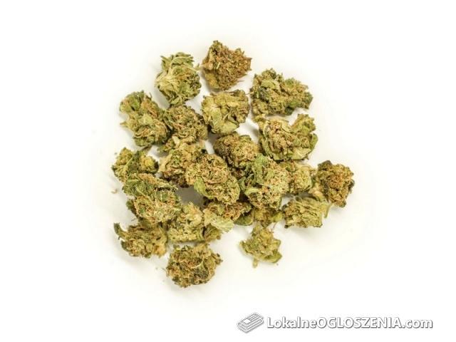 Susz CBD i Kwiaty Konopne - certyfikowane jakości premium