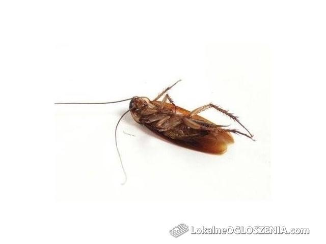 Zwalczanie owadów- karaluchy, prusaki, pluskwy, rybiki, gryzki inne