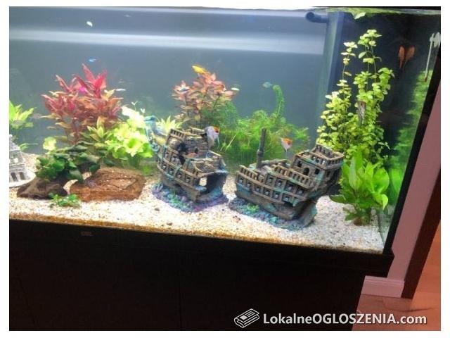 Nowe akwarium Juwel Rio 450